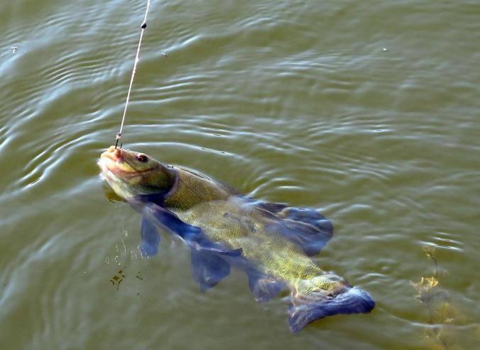 Рыбалка на линя поплавочной удочкой: снасть и оснастка, прикормка и наживки