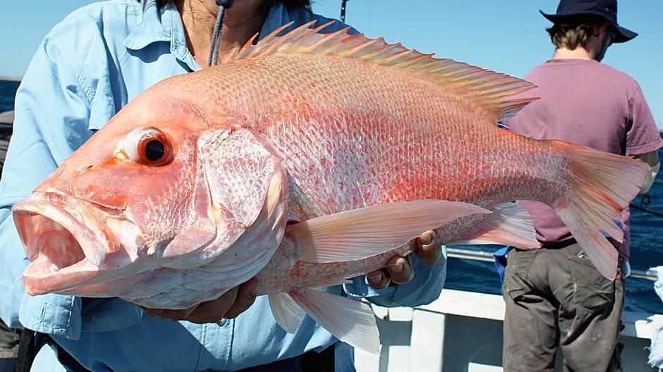 Рыбалка на морского окуня