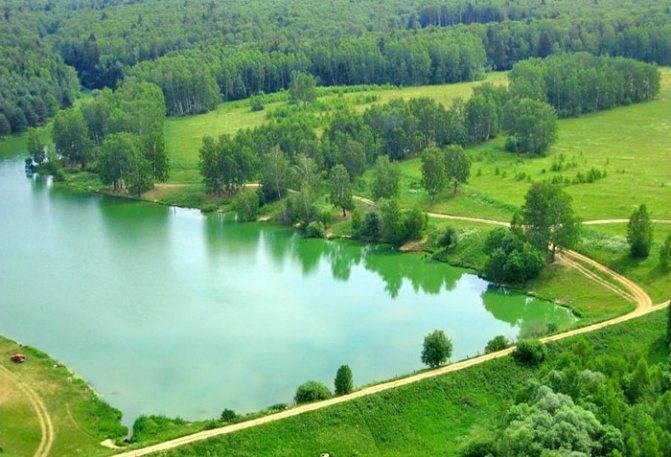 Платные пруды Чеховский район