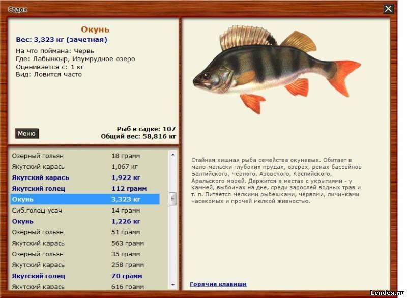 Рыбалка белгородской области – обзор водоёмов