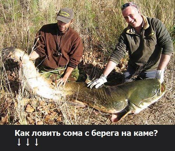 Ловля сома летом: снасти и способы ловли, приманки и наживки, поиск места ловли