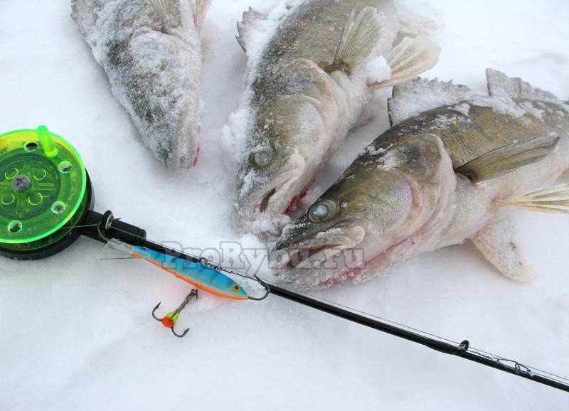Балансиры для зимней рыбалки: как ловить, какую рыбу ловят на балансиры, удочки для зимней рыбалки и лучшие балансиры топ-10