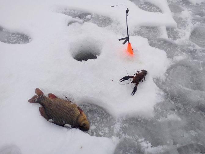Ловля карася зимой: что важно учесть?