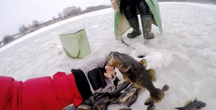 Ловля ротана зимой. выбор снастей, тактика для ловли ротана