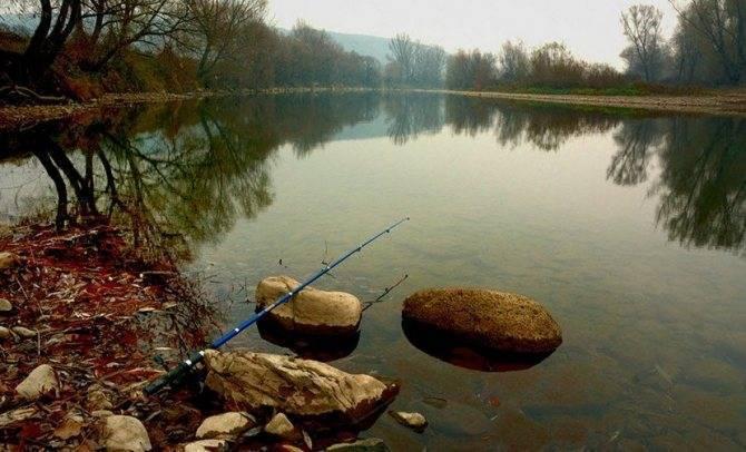 Ловля белого амура ранней весной — снасти, особенности и советы