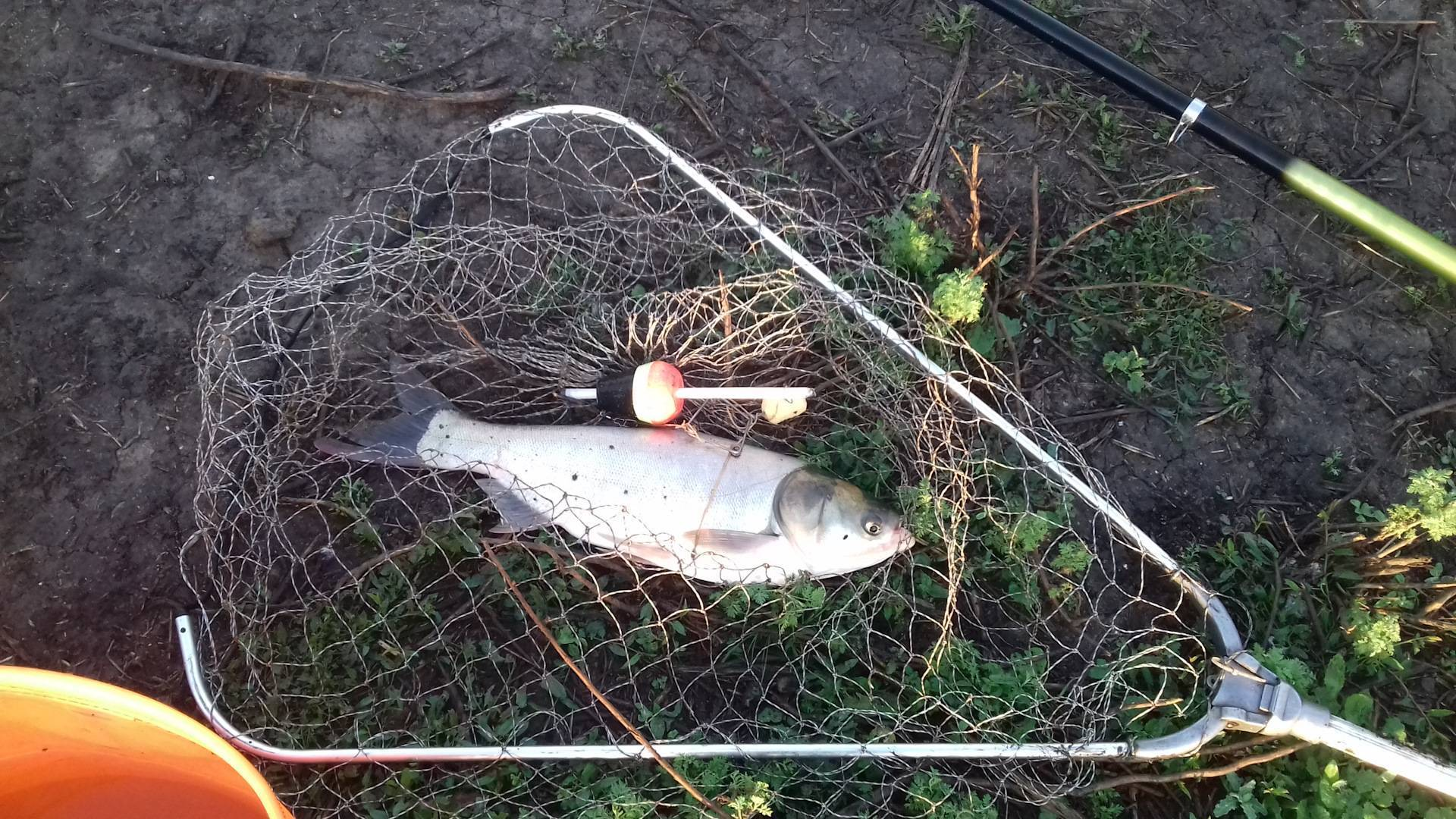 Рыбалка в брестской области: на реках, озерах, водохранилищах, клевые места