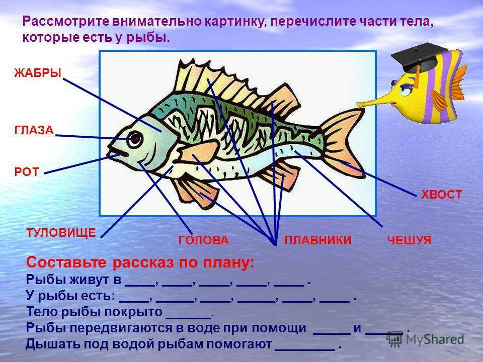 Хранение и передача информации (§§ 7, 8)