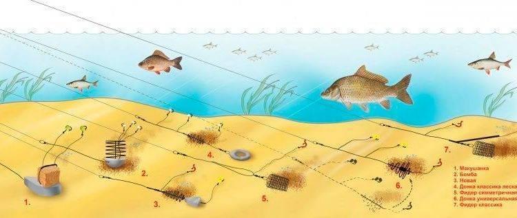 Как ловить сазана на фидер и подготовиться к рыбалке