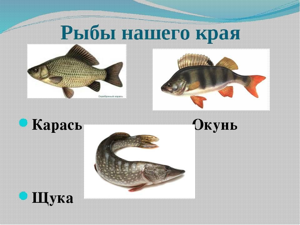 Болезни аквариумных рыбок — внешние признаки, симптомы и особенности лечения заболеваний, фото