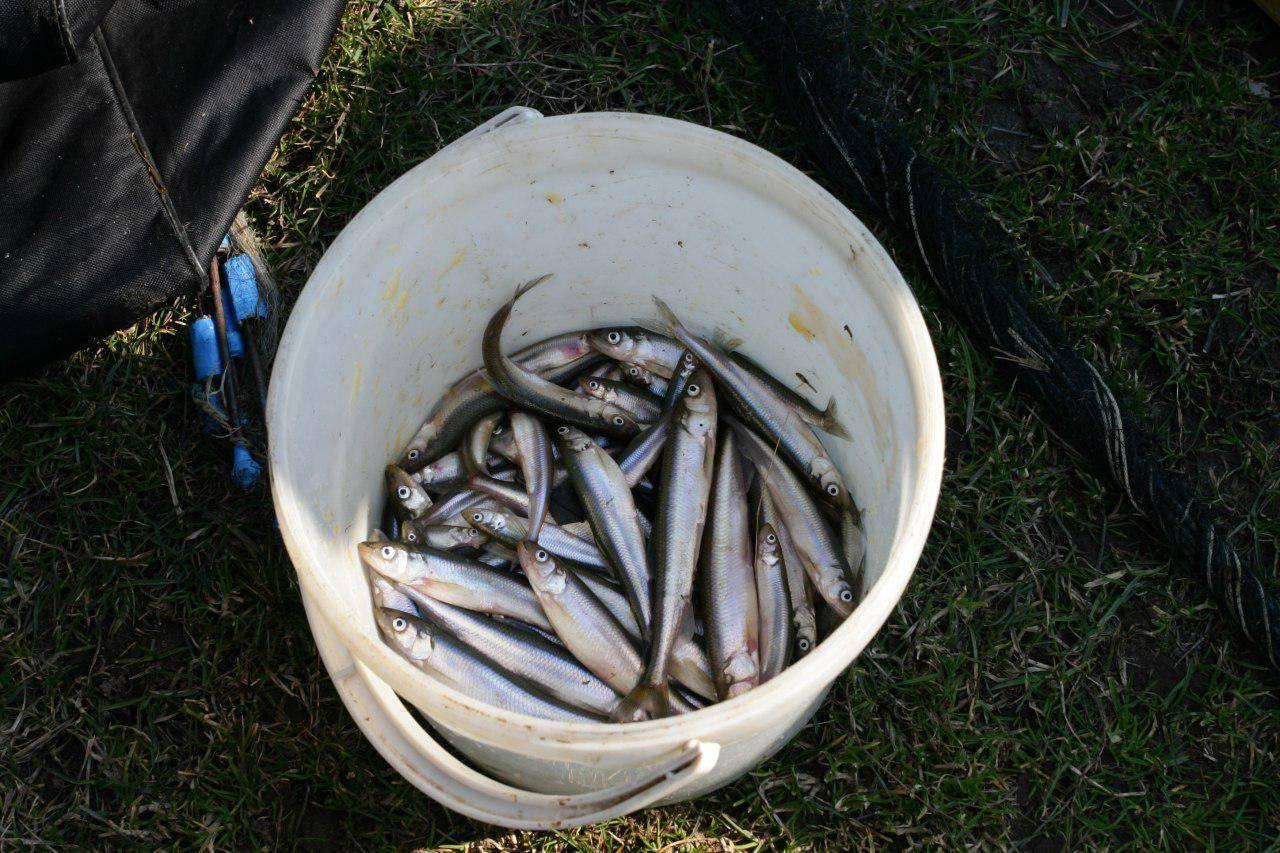 Рыбалка в калининградской области сегодня - платная и бесплатная рыбалка