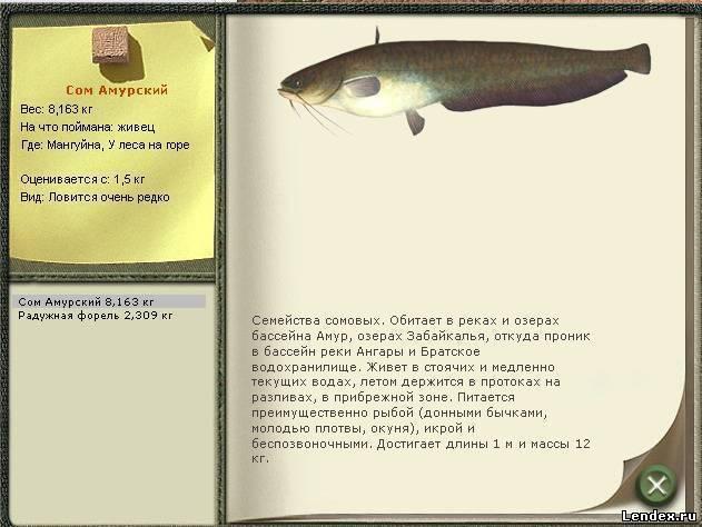 Сом - описание, фото, снасти и способы ловли сома, питание, нерест