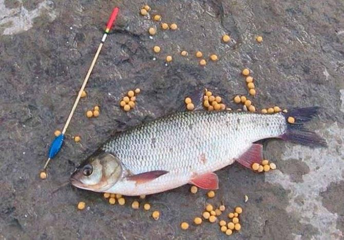 Снасти для рыбалки