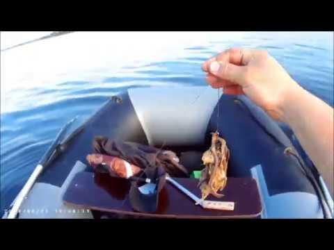 Как поймать сома? советы бывалых рыболовов