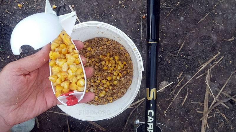 Кукуруза для рыбалки: как приготовить, запарить, сварить, насадить кукурузу