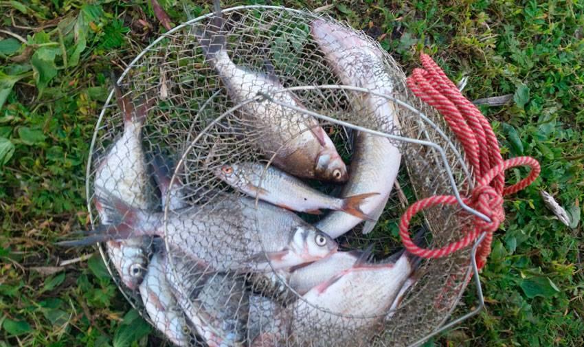 Рыбалка на плещеевом озере летом - все про рыбалку