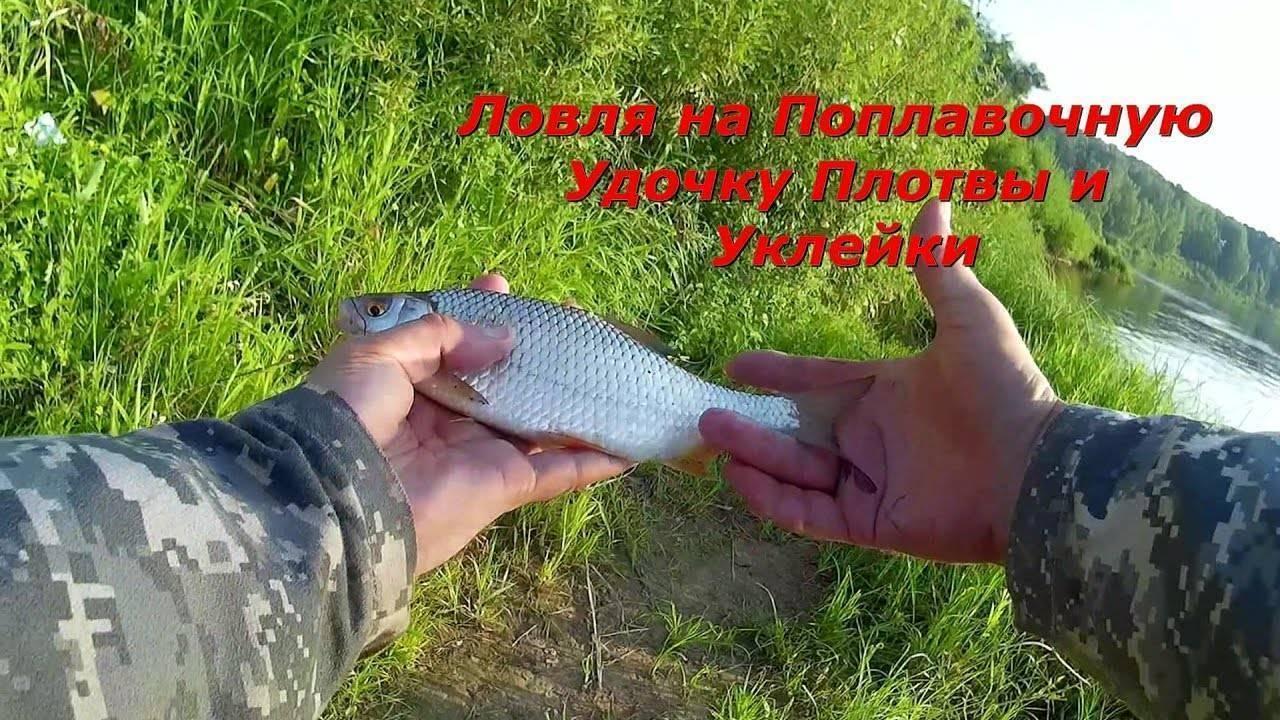 Как ловить плотву на удочку летом