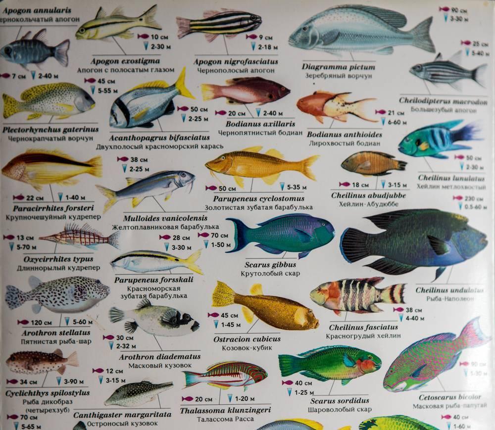 Флоридский синий рак: описание,содержание,фото | аквариумные рыбки